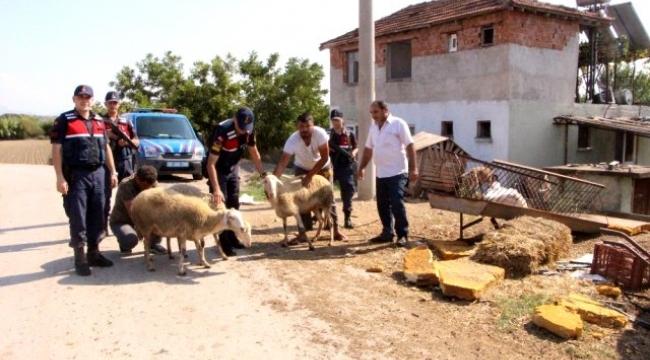Hayvan Hırsızları Böyle Yakalandı