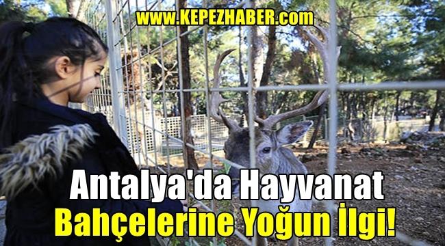 Antalya'da Hayvanat Bahçelerine Yoğun İlgi!