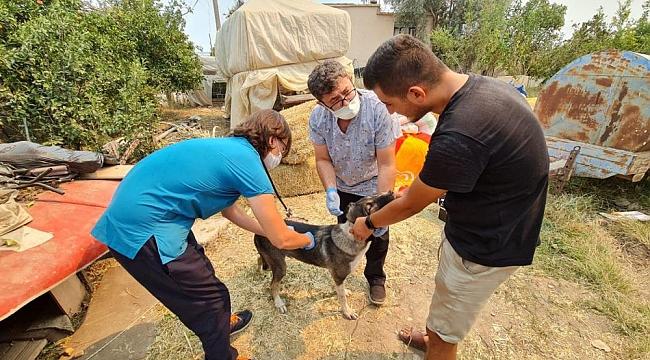 Kepez Belediyesi Yangın Bölgesinde Hiç Bir Canlıyı Unutmadı